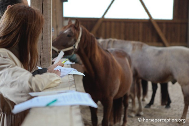 Coaching mit Pferden – ein kollegialer Tipp